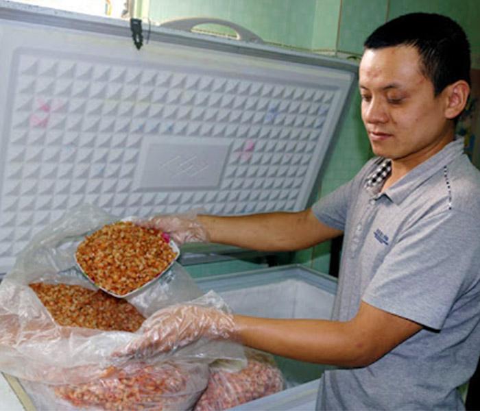 Bảo quản số lượng tôm nhiều trong tủ bảo quản hoặc ngăn đá tủ lạnh