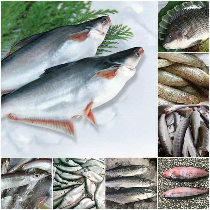 Một số loại cá thường dùng làm chả